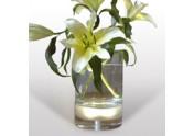 Bloom!, Vase